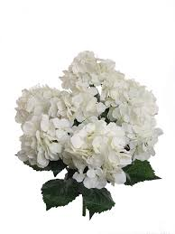 white hydrangeas 1 artificial silk 22 white hydrangea bush w 7 mop