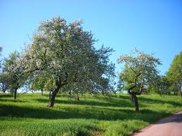 small trees under 30 feet for a small yard or garden dengarden