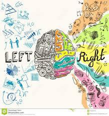 brain hemispheres sketch stock vector image 44536474