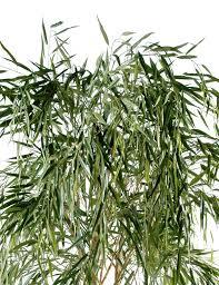 bonsai saule pleureur saule pleureur artificiel 210 cm 229 00 u20ac