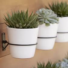 pretty pots striped succulent planter house design ideas