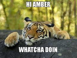 Whatcha Doin Meme - hi amber whatcha doin confession tiger make a meme