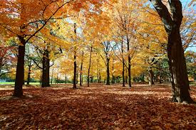 12 stunning photos of fall colours in high park