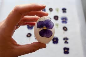 Easter Egg Decorating Blown Eggs by Diy Pressed Flower Easter Eggs Cloverhome