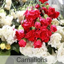 bulk carnations frans flowers bulk flower orders