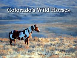 colorado mustang image detail for colorados horses edited 1 50 amazing