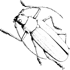 free prinable insects coloring pages for kids