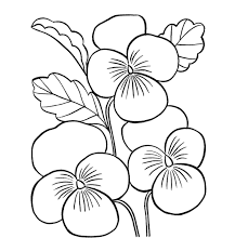 colour drawing free wallpaper beautiful flower coloring drawing