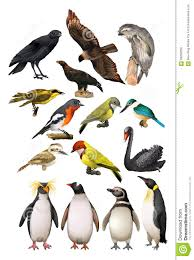 different kind of birds stock vector image 59250332