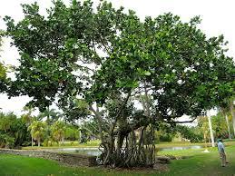 what is a native plant what is a native plant magickalideas com