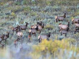 Utah Hunting Maps by Apply For An Antlerless Permit