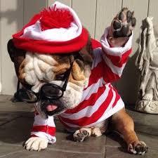 English Bulldog Halloween Costumes 860 Bulldogs Images English Bulldogs English