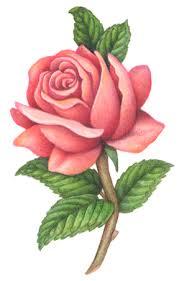 style flower flowers stock art illustrations douglas schneider illustration