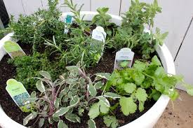 Outdoor Container Gardening Ideas Create An Edible Container Garden With Diy Home Garden