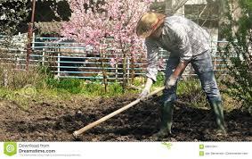 Vegetable Garden Preparation by Man Hoeing Vegetable Garden Soil Stock Video Video 69612641