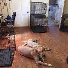 dirty dog salon pet groomers 914 joliet st leonidas new