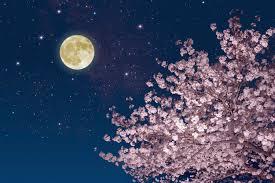 celebrating the full moon