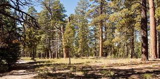 Arizona forest images 7 reasons for forest restoration in northern arizona grand jpg