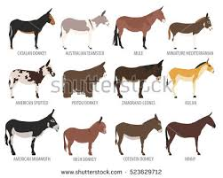 donkey stock images royalty free images u0026 vectors shutterstock