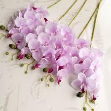 Orchid Centerpieces Orchids Centerpieces Promotion Shop For Promotional Orchids
