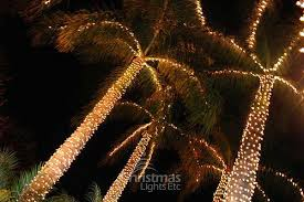 more palm trees wrapped in minilights of palm trees flickr