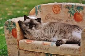 gatti divani 5 segni che la tua casa 礙 in balia dei gatti caniepadronifelici