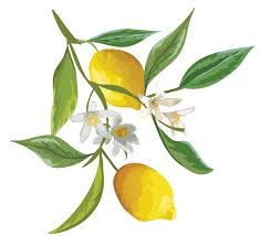 When Does A Lemon Tree Produce Fruit - how to just one tree
