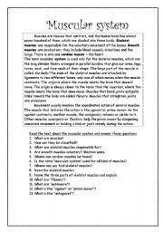 english teaching worksheets muscular system