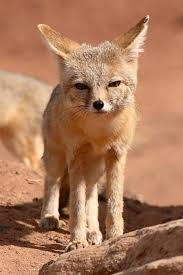 California Wild Animals images Bloodthirsty wild animal best blog small wild animals in california jpg