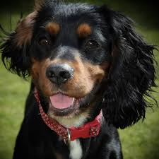 paws 4 a break dog sitters in doncaster s64 dogbuddy