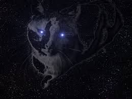 cat universe wallpaper space cat full hd wallpaper and background image 2816x2112 id 474379