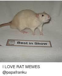 Rat Meme - best in show i love rat memes funny meme on me me
