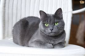 worms and internal parasites in cats pets4homes