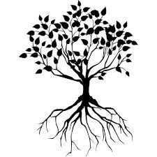 black tree with roots design real photo pictures images
