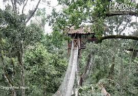 famous tree houses 5 dream tree house honeymoons