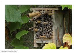 sorte de bambou comment construire des gîtes à insectes la vie dans les gîtes à