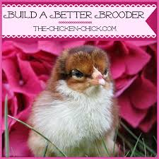 the chicken how to build a better brooder for raising baby
