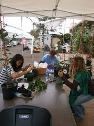 Tropical Plant Biology - curriculum tropical plant and soil sciences
