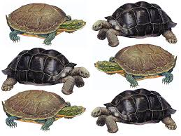 what u0027s the difference between a turtle and a tortoise