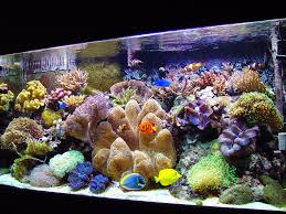 home accessories and decor interior fair picture of decorative stone saltwater colorful fish