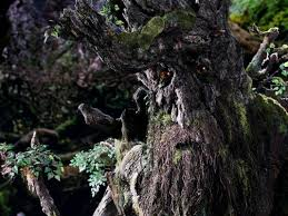 groot vs ent lord of the rings battles vine