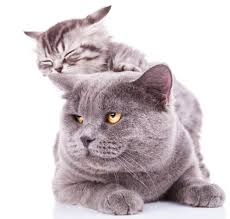 15 pictures of mama cats and kittens for mother u0027s day cattime