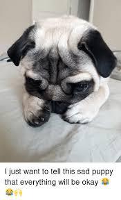 Sad Pug Meme - 25 best memes about sad puppy sad puppy memes