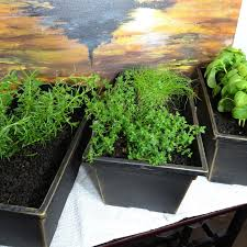 indoor herbs to grow creating a simple indoor kitchen herb garden indoor apartment