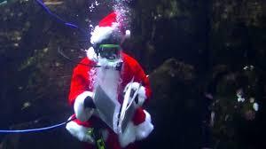 diving santa oregon coast aquarium newport oregon youtube