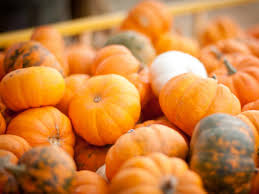 small pumpkins freezing pumpkins hgtv
