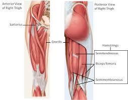 Diagram Of Knee Anatomy Muscle Anatomy Knee Anatomy Of The Knee Health Life Media Human