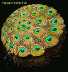 interior cute peacock crafts improving unique interior designs