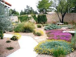 Bushes For Landscaping Cool Bushes To Plant Landscape Plants For The Desert Municipal