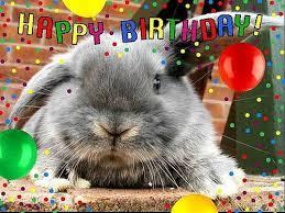rabbit birthday happy birthday peppypoo binkybunny house rabbit